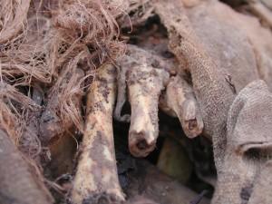 Inca mummies - Inca Rebellion of 1536