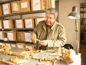 Guillermo Cock examines Inca remains from Puruchuco-Huaquerones