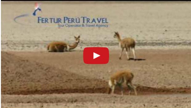 Peru Travel Trend Video: Colca Canyon