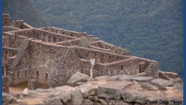 Elvis spotted at Machu Picchu!