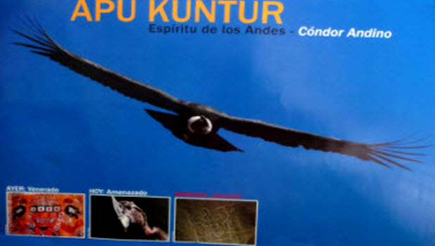 Momentum mounting for stronger laws to protect Peru's endangered Andean Condor