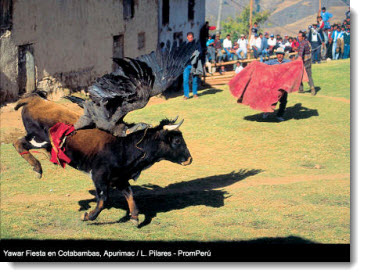 Yawar Fiesta - Cotabamba, Apurimac / PromPeru