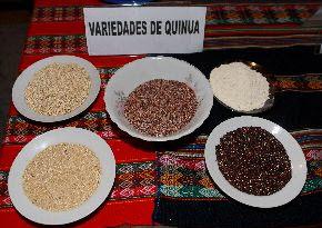 Varieties of quinoa -- Agencia Andina