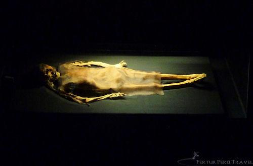 Dama Cao on display in the El Brujo ~ Museo Cao