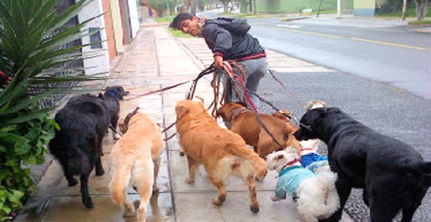 The spiritual afterlife of dogs in Peru