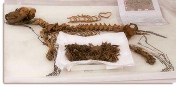 ancient_dog_remains_excavated_at_parque_de_las_leyendas