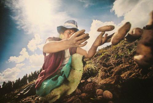 Potatoes - the bounty of highland Peru