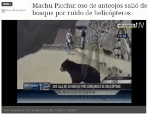 Video footage of an endangered spectacled bear cub dashing through Machu Picchu