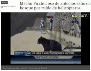 Video footage of an endangered spectacled bear cub dashing through Machu Picchu