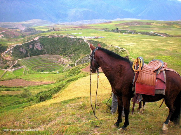 Apupacha horse above the Inca archaeological complex of Moray at the culmination of a full-day horse-riding tour of Cusco's Sacred Valley