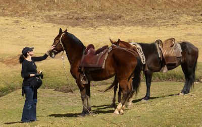 Vacationer on her anniversary vacation in Cusco caresses one of two Peruvian Paso horses during the horseback riding tour she took with her husband to the Inca ruins of Moray.