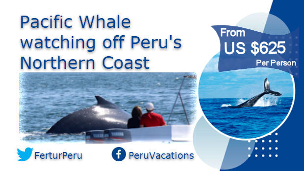 Whale Watching on Peru's tropical northern coast