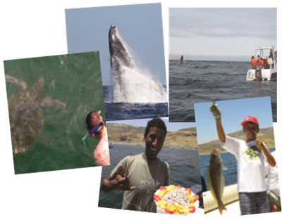 Montage of activities, including whale-watching, snorkeling, fishing and enjoying fresh ceviche as part of package tour to northern Peru