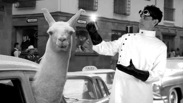 7 Things You Should Know About the Peruvian Llama
