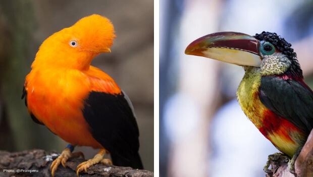 Birdwatching Peru - Photo by @Promperu