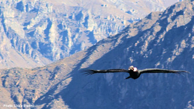 Best Time to See Condors in Colca Canyon