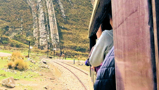 A local man on horseback crosses the tracks with his dog as the Central Andean Railroad train passes - A photographer's dream shot