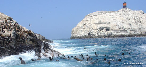 Large group of Sea Lions swimming - Image by Mar Adentro