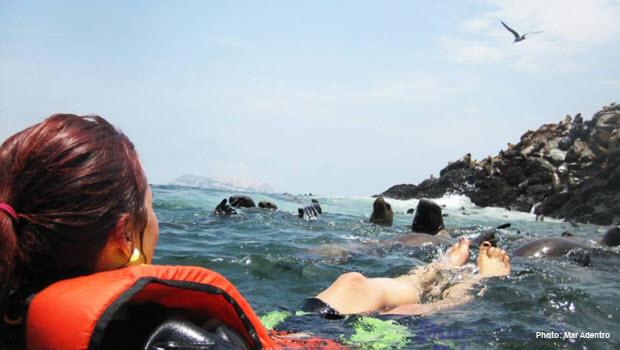 Swim with Sea Lions in Peru: Palomino Island Boat Tour