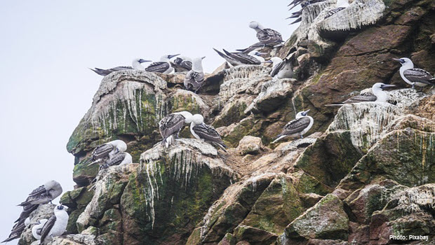 Birds in Ballestas Islands - Paracas Peru - Photo by Pixabay