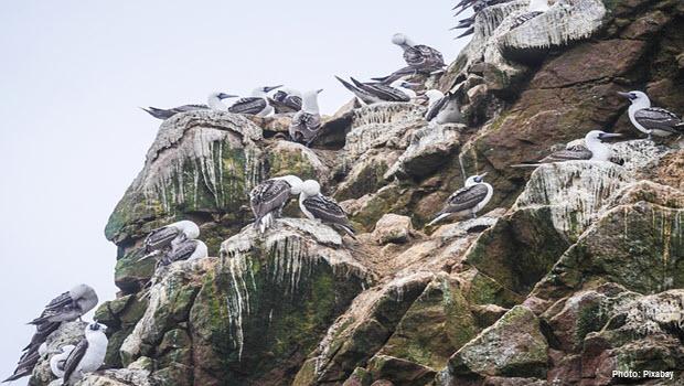 Birds in Ballestas Islands - Paracas Peru - Photo by Pixabay