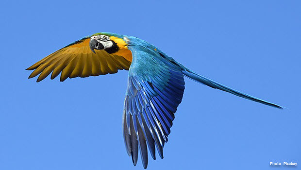 Macaw in Tambopata - Photo by Pixabay