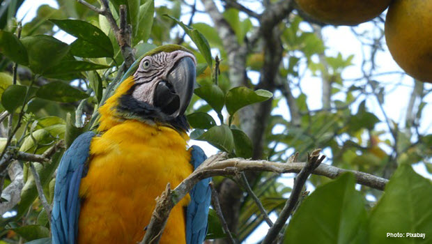 Parrot in Pacaya Samiria - Photo by Pixabay