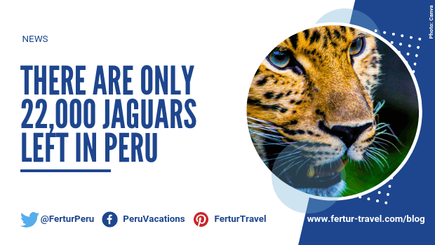 There Are Only 22,000 Jaguars Left in Peru