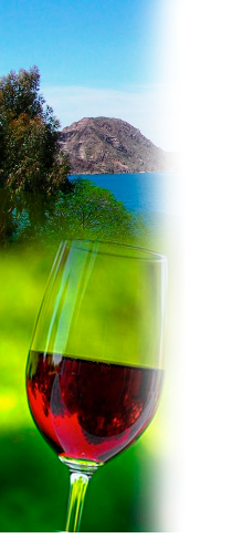 Contrate hoy la Ruta del Vino en la ciudad de Mendoza en Argentina