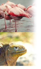 You'll see Flamencos and Iguanas close up during your four-day Galapagos Tour Package.