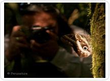 Perunature photographer butterfly