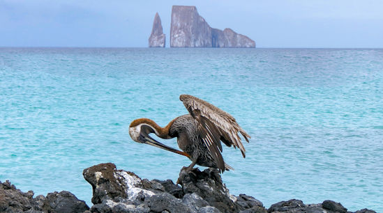 Galapagos Islands - Birds