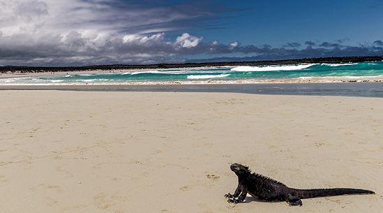 Galapagos Island - Reptile image