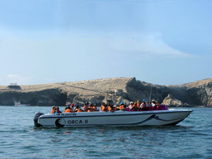 This boat tour takes you to the heart of one of the world's great marine wildlife preserves.