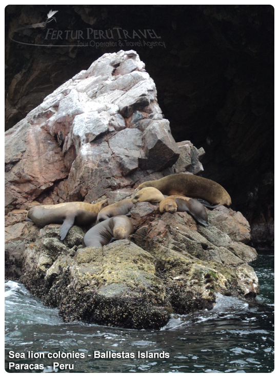Paracas Ballestas Island Tour